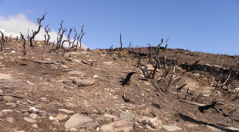 2014 Επιπτώσεις των πυρκαγιών στον τουρισμό της Άνδρου.